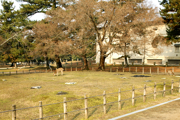 春日東塔跡 (右奥は青銅器館)